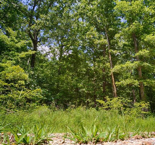 2 West Off Keel Hollow Lane Erin, TN 37061