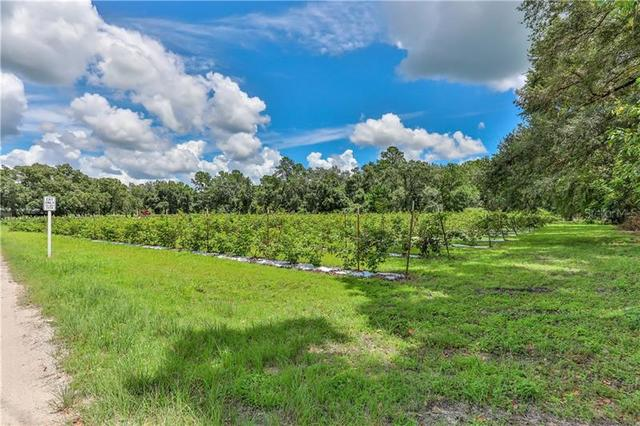 Tract D Squirrel Prairie Road Brooksville, FL 34604