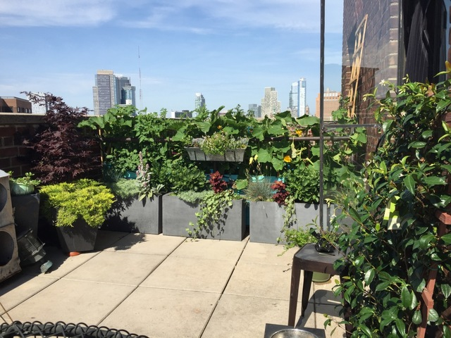 185 Clinton Avenue, Unit 14F Brooklyn, NY 11205