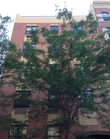 440 East 117th Street, Unit 4A Image #1